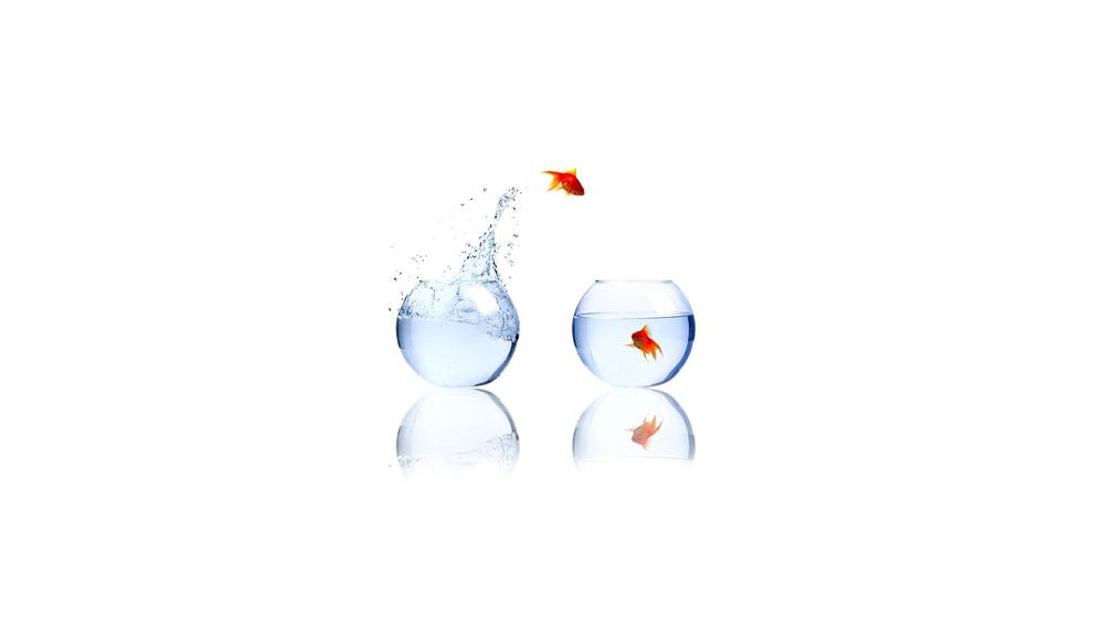 Goldfish Simplicity