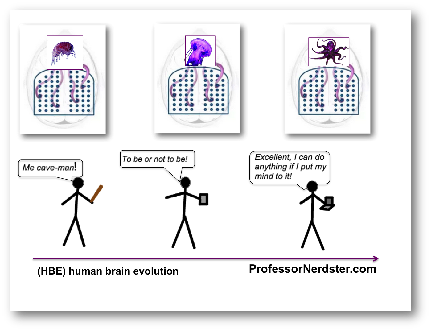 human brain evolution