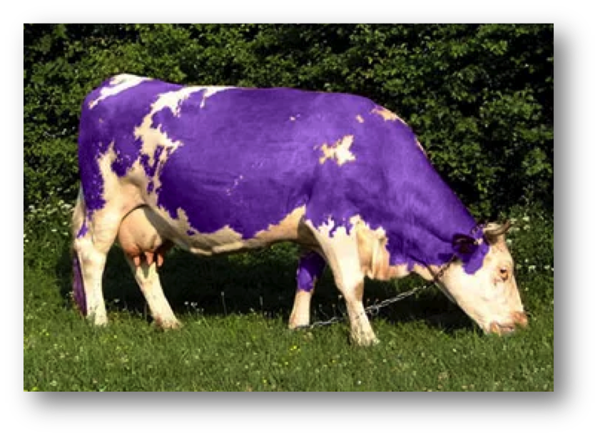 Purple Cow Thoughts